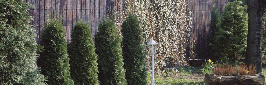 Siekmann Pflanzensteine